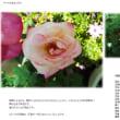 オープンガーデンG20 バラたち