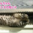 そう言えば、子猫の時は変な所で寝てたよね