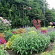 町内の花壇がコンクールで市議会議長賞受賞