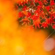 2017織りなす秋の彩 《唐津市厳木町環境芸術の森》