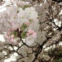 春狂言2014と新宿御苑
