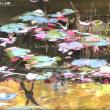 須賀川牡丹園の紅葉・・・2018