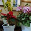 玄関で冬越しの花