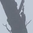 朝霧の弘法山公園にて
