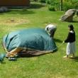 久し振りのお客さま 「庭のテント」