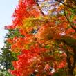 鎌倉紅葉散歩