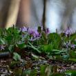 早春の赤城自然園