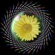 花の郷の花を・・・