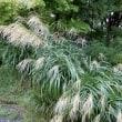 京都北の方^^ぶらぶら歩き・・・1 源光庵