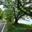 琵琶湖湖岸緑の風景