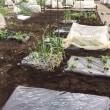シェア畑だより 夏野菜の土づくり🎶