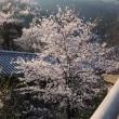 ぶらり旅・長谷寺⑤本堂<2>(奈良県桜井市)