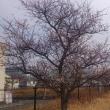 公園の台風24号台風の被害を受けた木は