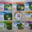 秋~春キャベツのタネまき(2)