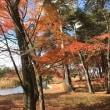 秋を愉しむ 日課516