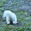 白い動物? & 写真展のお知らせ