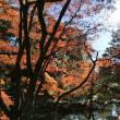 (フアン3号)   近くの「縮景園」へ行きました。