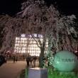 上野公園夜桜・西郷どん・弁天堂