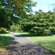 昭和記念公園のコスモス見頃です♪