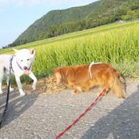 ゆる~い朝散歩