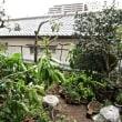 台風一過の晴天