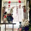 中秋の名月とウサギ猫  /  姉妹の晴れ着大公開!