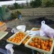 11月24日 農園作業日