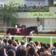 阪神競馬へ行ってきました。(神戸新聞杯)