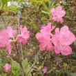 花畑の植物