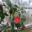 寒い日には花の暖かさを11/25