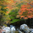 4412 色づく河原