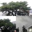 9月5日(水)今日の北川桜