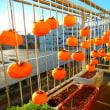 今年の干し柿