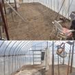 18年09月14日 野菜の収穫後の茎、葉の堆肥化