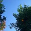 晴れた空と柚子