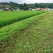 カメムシ対策の草刈り