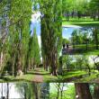 TREE CIRCLE 「小さな写真便り」 (368)