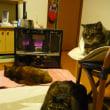 三猫集合♪ 2♪