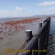 有明海の干潟で野鳥撮影  ー お代官の里帰お供・自由時間 -
