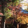見ごろになった世田谷豪徳寺の紅葉 (1)