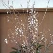 花盛り128