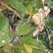 12月10日(月曜日)「蜘蛛」(ka-koさん)