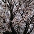 3月20日 本日は南養寺での告別式参列の後にインターン生と共に東京都議会見学、都選管へ収支報告を提出しました