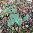 夏の草花からバトンタッチ