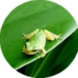 雨の庭で 蛙たちが・・・