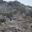 信濃飛騨山旅 2013年夏   濁河温泉から御嶽山剣が峰へ 2013年8月26日 その2
