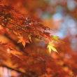 文学閑話:紅葉雨の恋×万葉集