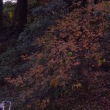 福岡市動物園の木の葉