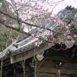 【中止】小江戸川越コース 約6.4Km