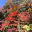 小倉公園の紅葉